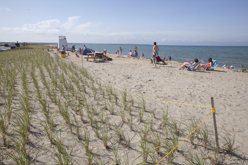 The Vineyard Gazette Martha 39 S Vineyard News Bend In Road Beach Done Redone