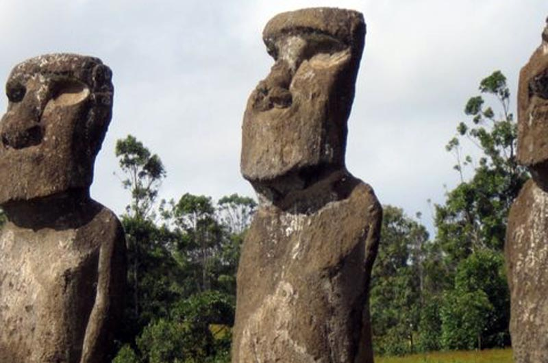 Birding on easter island is no bust the vineyard gazette