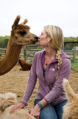 alpaca kissing
