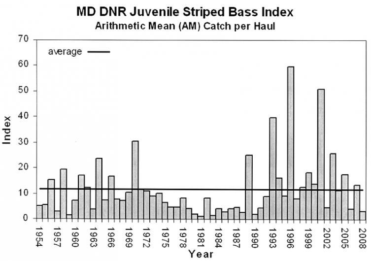 Striped Bass Index 2008