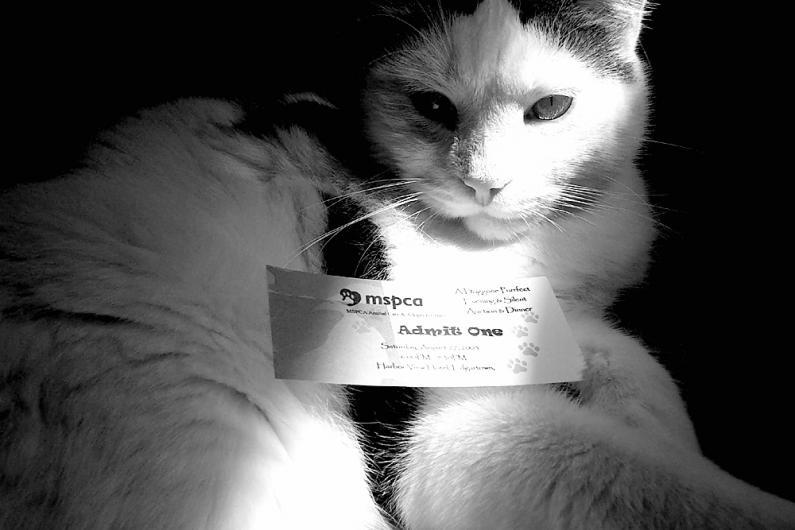 kitty at the MSPCA