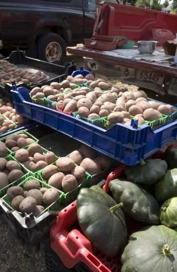 beds of potatoes and squash