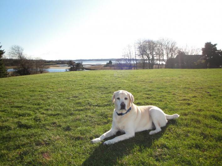 Bridger on lawn