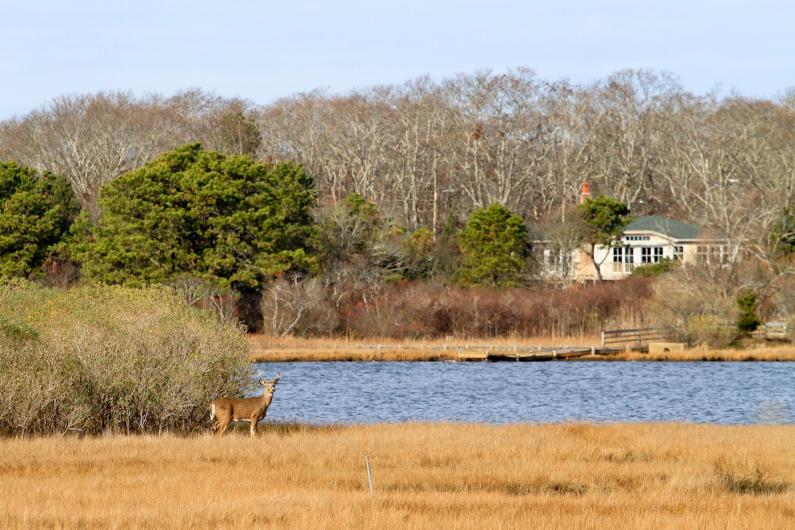 Deer Farm Pond