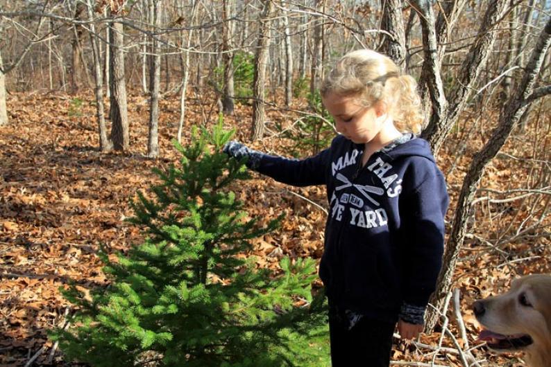 Sabrina Frank Christmas tree Cedar Tree Neck.