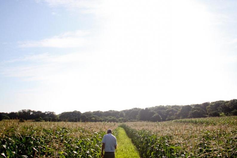 Jim Athearn corn fields