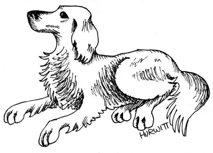 dog line drawing illustration cartoon BW