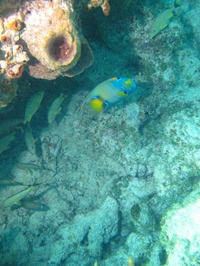 under sea fish coral shell