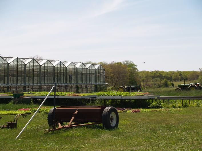 Thimble Farm