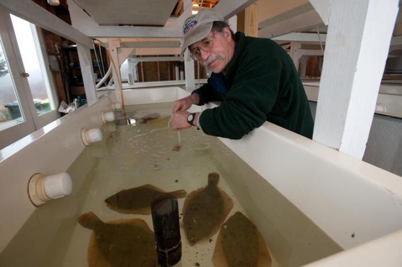winter flounder John Armstrong
