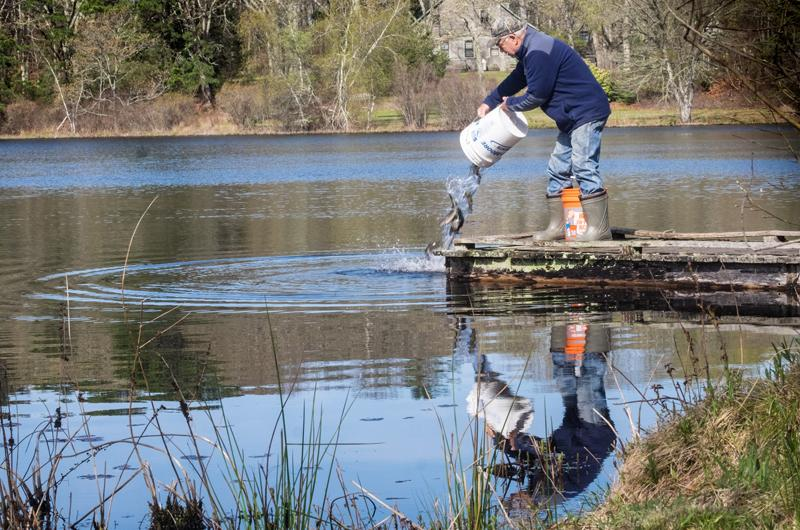 The vineyard gazette martha 39 s vineyard news first for Fish pond preparation