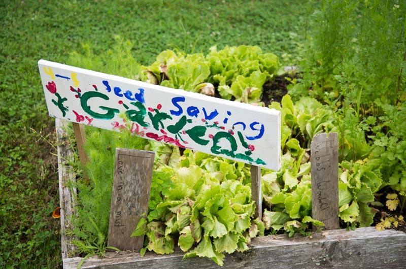 Island Grown Initiative Martha S Vineyard