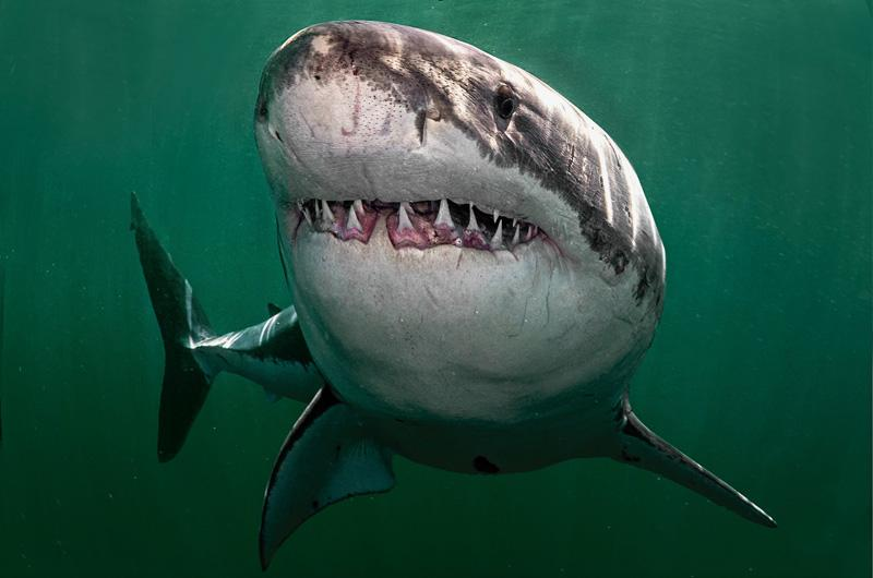 There Is a Shark That Can Live for 400 Years
