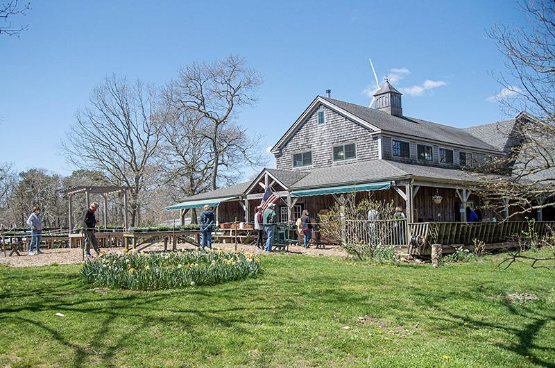 The Vineyard Gazette Martha S Vineyard News Full Speed Ahead At Morning Glory Farm