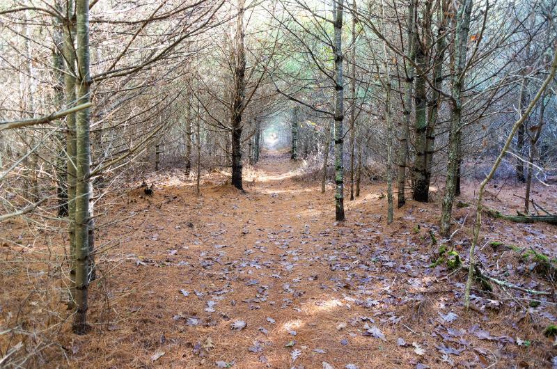 island forest path