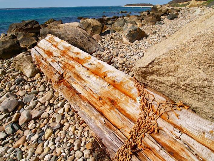 driftwood at cedar tree neck