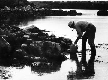mussel gathering
