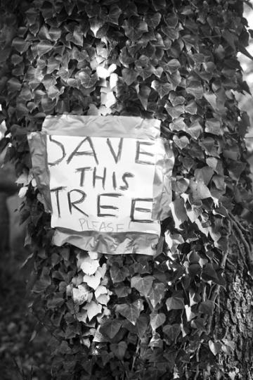 Save This Tree