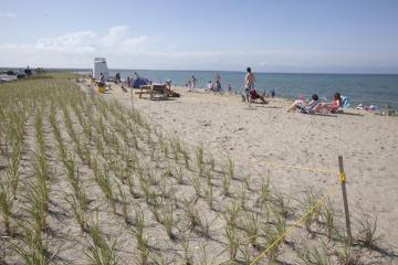 dune restoration: