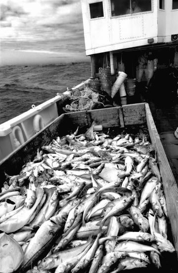fishing haul