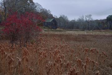 Cranberry Acres