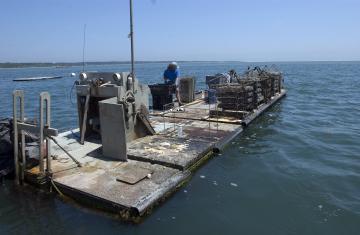 oyster farm