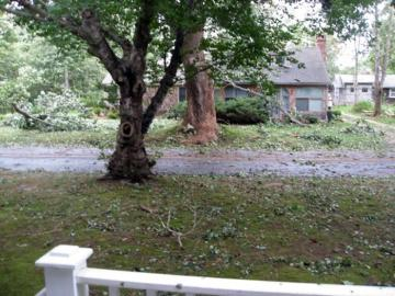 storm damage leaves yard