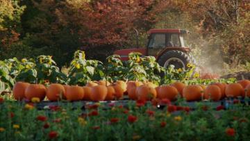 pumpkins flowers garden farm tracktor