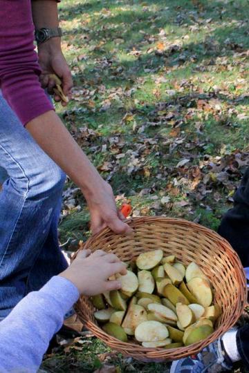 apple slices basket