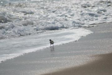 shore bird ocean sand beach
