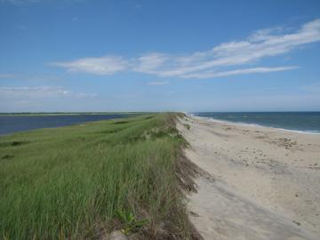sand dune beach