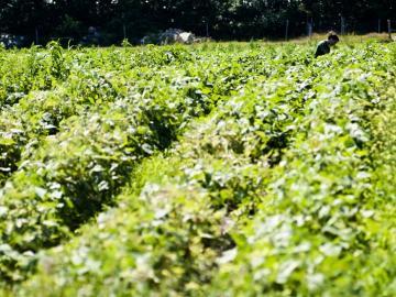 garden field farmer