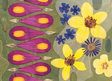 flowers flower petals