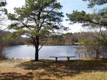 pond Duartes tree bench