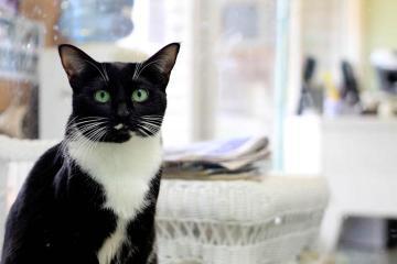 Annabelle cat