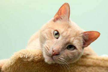 Deacon cat