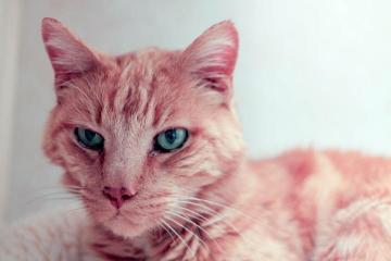 Eric the Red cat