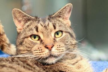 Kitty Randolph cat