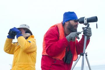 yellow and red bird watchers