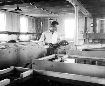 John Hughes lobster hatchery