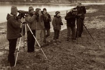 Martha\s Vineyard Bird Watchers