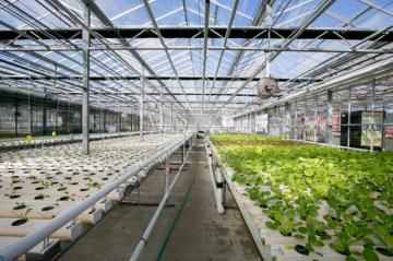 Luckily, greenhouses make a plant-based lifestyle possible all year round.