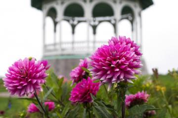 Ocean Park flowers.