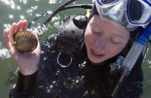 Jessie Kanozak diving for scallops