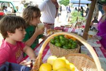 West Tisbury Farmers Market