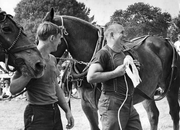 Prize draft horses