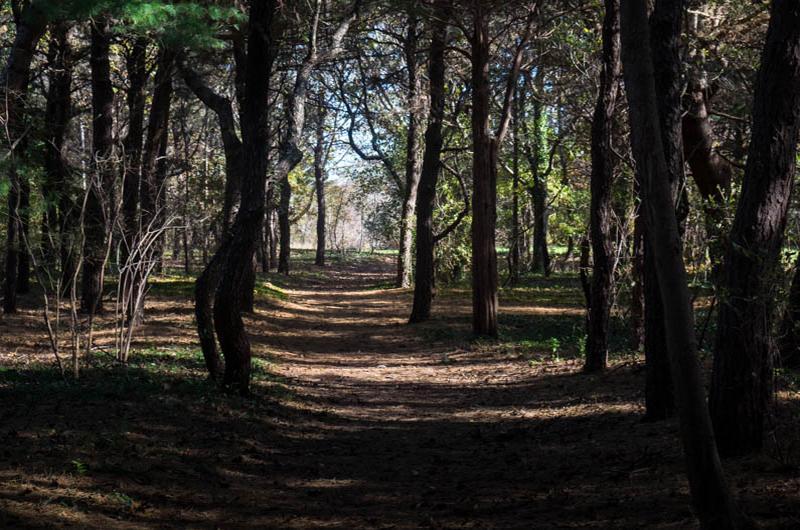 Sheriff's Meadow walk along the path.